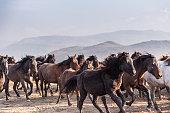 Wild Horses running in mountain range.