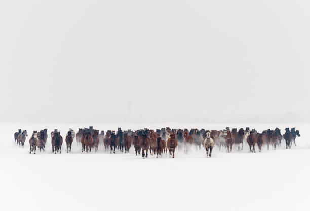 Wild horses running in snow picture id855243836?b=1&k=6&m=855243836&s=612x612&w=0&h=b1wghxfvnyy658llyxltzrcqslyztjw62ecsunrbcki=