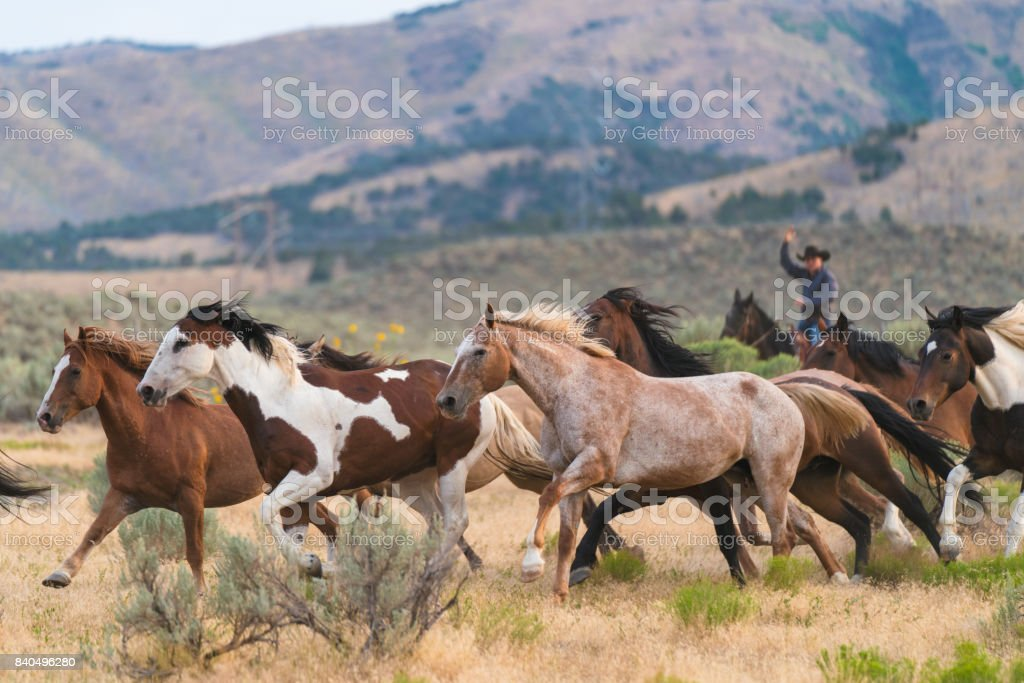 Wild horses running in the foothills of a mountain stock photo