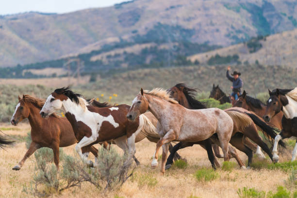 Wild horses running in the foothills of a mountain - foto stock