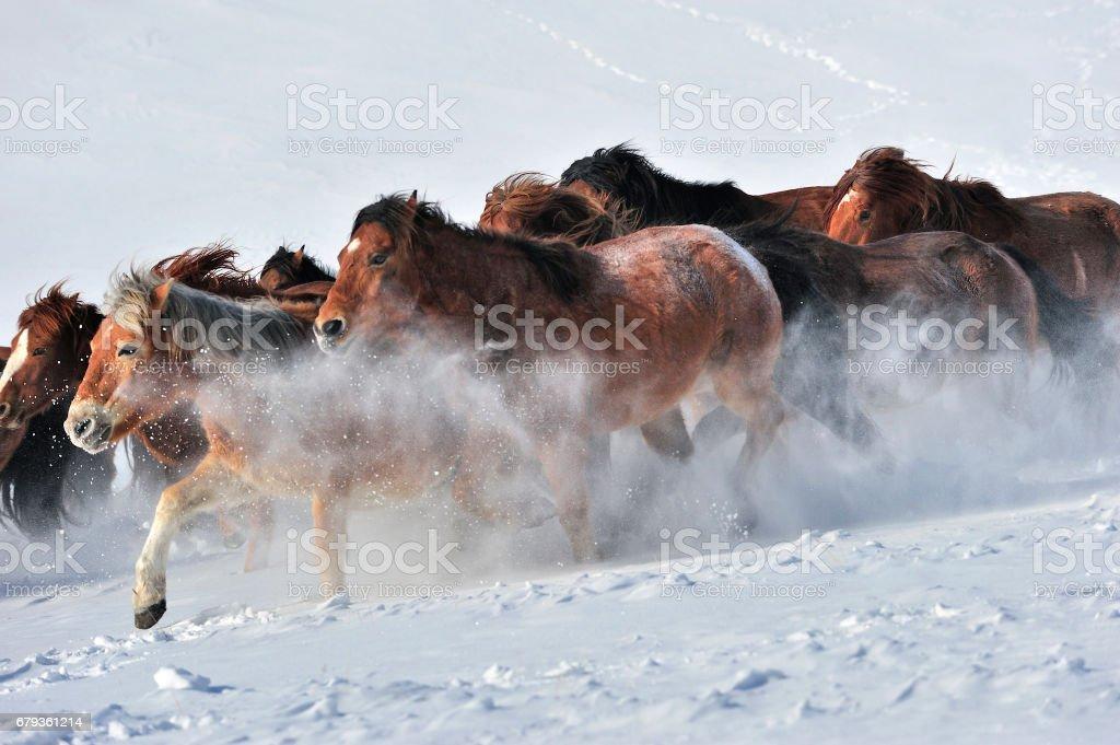 Wild Horses Running Stock Photo Download Image Now Istock
