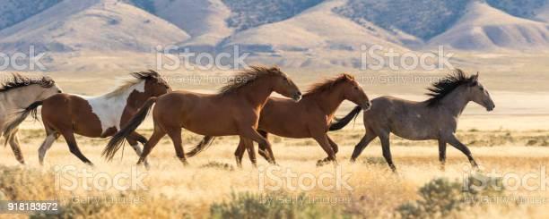 Wild horses running picture id918183672?b=1&k=6&m=918183672&s=612x612&h=c9a5sagtm8sdjd9wgwmgygocby7bxmzsiiym gqpkwa=