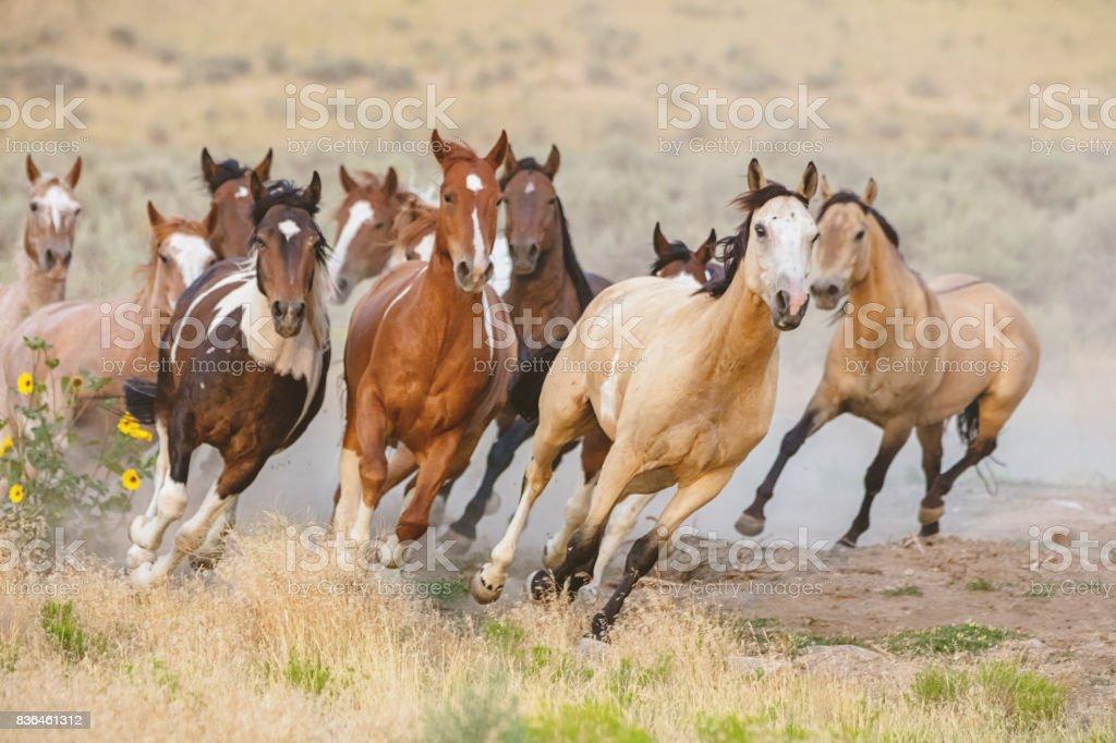 野生的馬跑美國猶他 - 免版稅一群動物圖庫照片