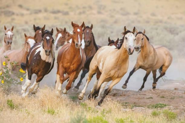 Wild horses running utah usa picture id836461312?b=1&k=6&m=836461312&s=612x612&w=0&h=eboqvfdv0icybcgi6eh8afv9fmdi0nqi3jmdbhvj6yi=