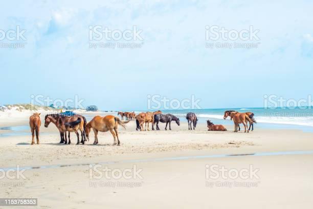 Wild horses standing by the ocean picture id1153758353?b=1&k=6&m=1153758353&s=612x612&h=y5gnvg7qirjmpkxtkcnwxubjh8pxdg3jgaezx5orqkq=