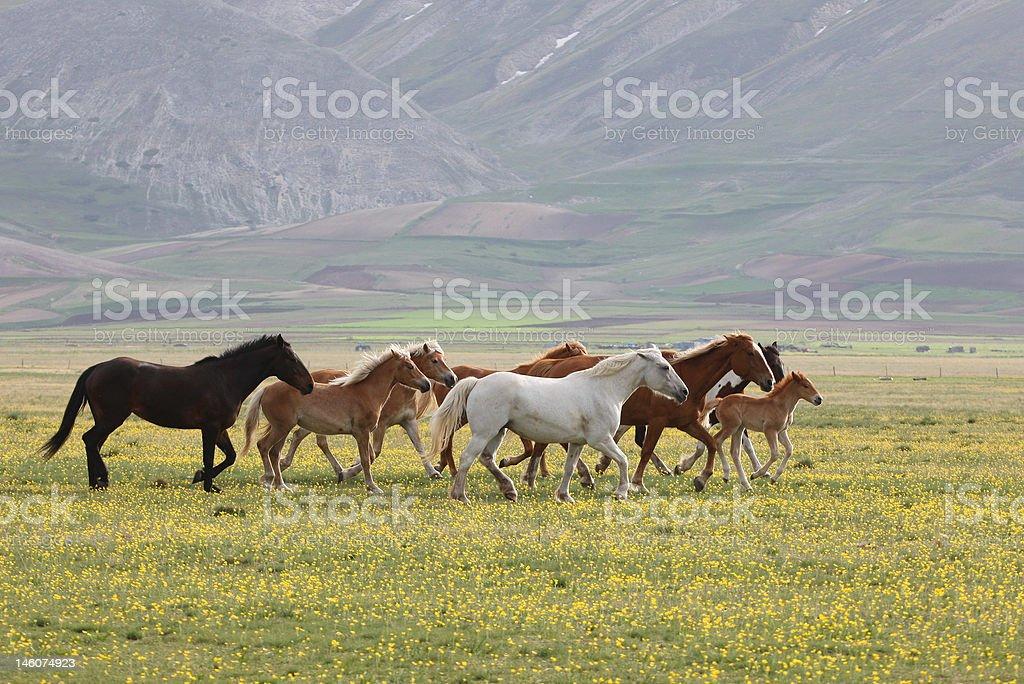 Wild Horses, Umbria stock photo