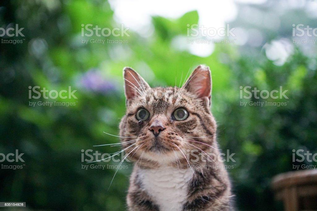 Wilde Hauskatze kommt jeden Tag zu essen – Foto