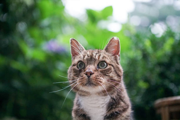 wilde hauskatze kommt jeden tag zu essen - suche katze stock-fotos und bilder