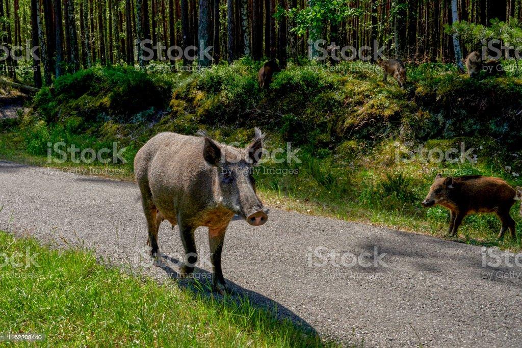 Wild in the city, Krasibor around Swinoujscia, Poland - a wild walk...
