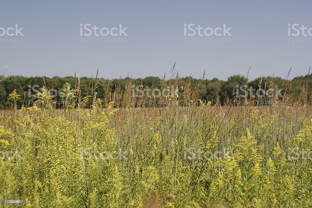 wild Indiana grasslands royalty-free stock photo
