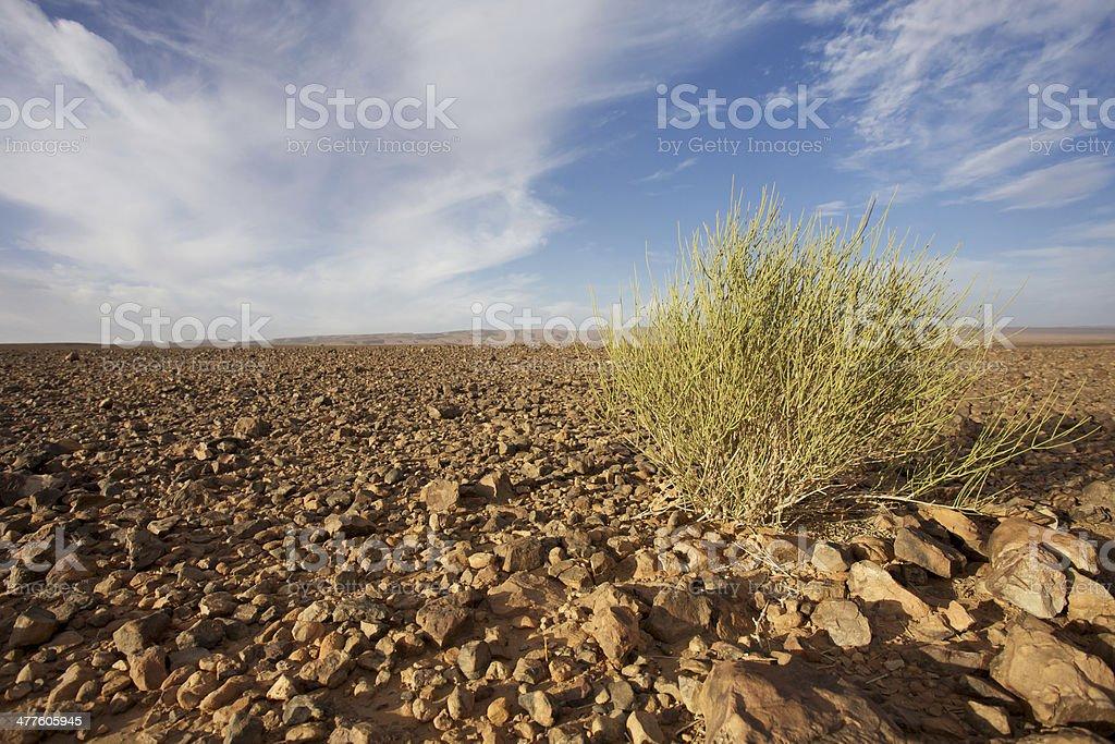 Wild landscape in Morocco stock photo