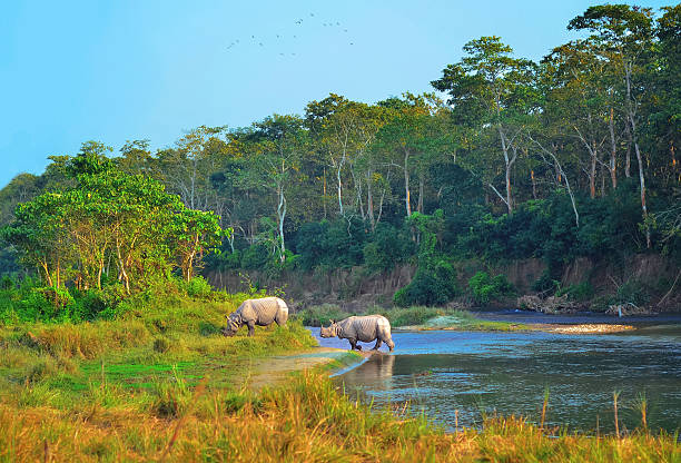 Wild landscape with asian rhinoceroses stock photo
