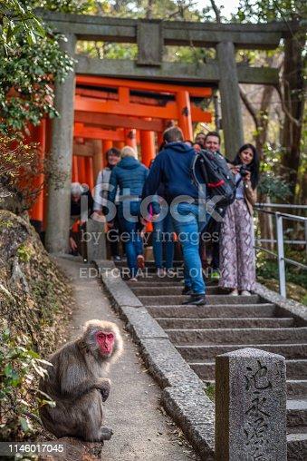 Kyoto, Japan. 29 March 2019:  Tourists looking a wild monkey in  Fushimi inari taisha shrine