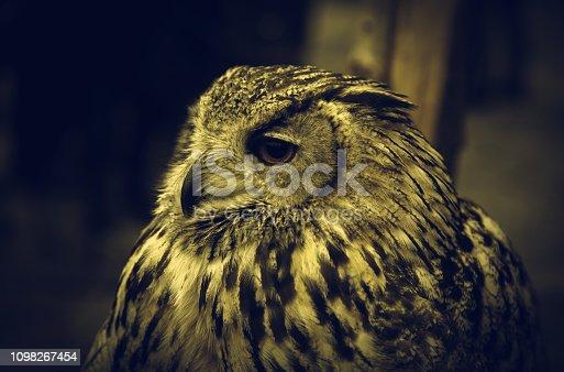 Wild mammal owls in nature, animals