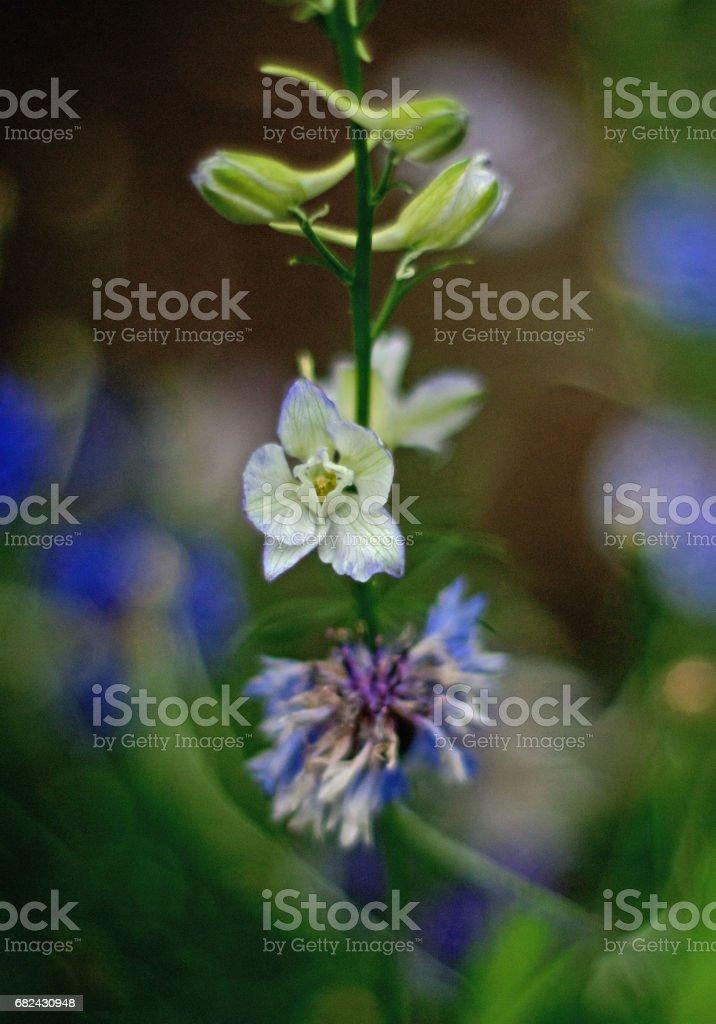Wild Meadow flowers New York royalty-free stock photo