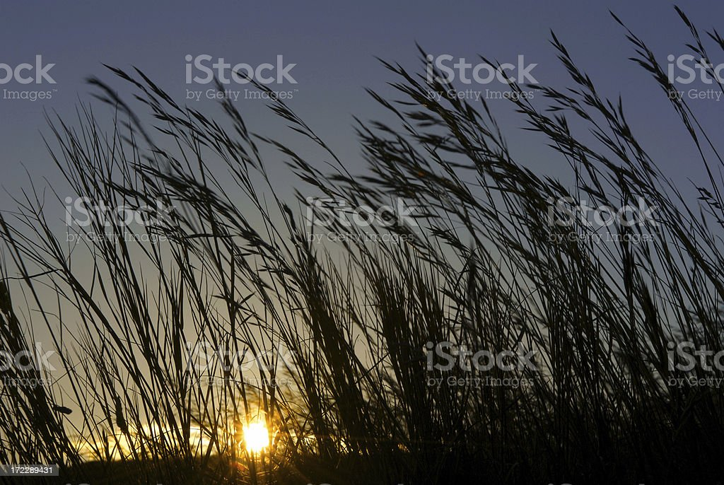 Wild Meadow grass at sunset stock photo