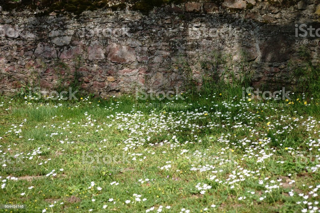 Wild meadow in front of a rustic wall stock photo