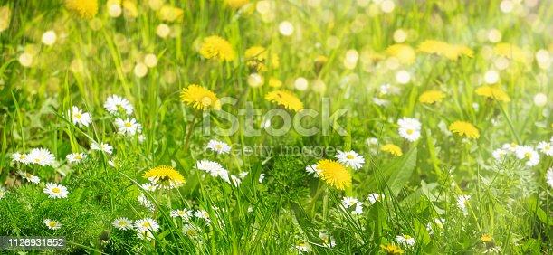 istock wild meadow in sunshine 1126931852