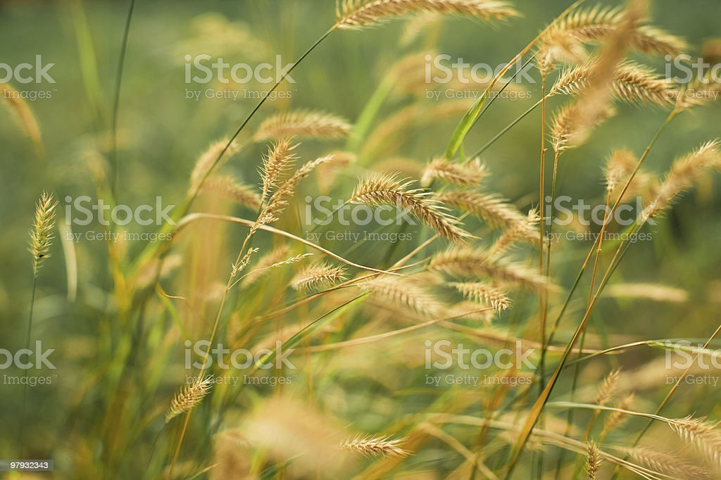 Wild  meadow - summer season royalty-free stock photo