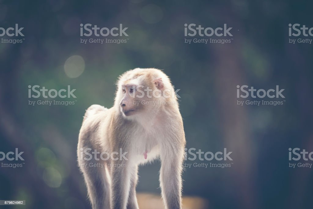wild monkey, close-up stock photo