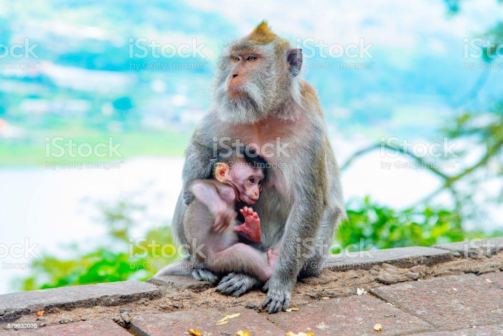 Wild monkey family stock photo