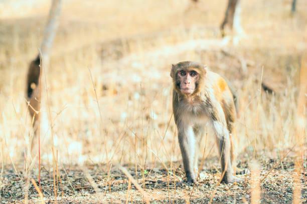 Wild monkey in nature stock photo