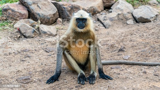 Monkey sitting on the ground in a nature reserve