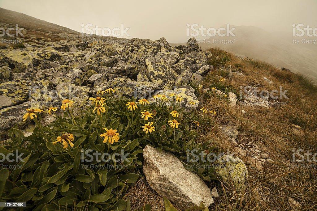 Wild Mountain Flowers stock photo