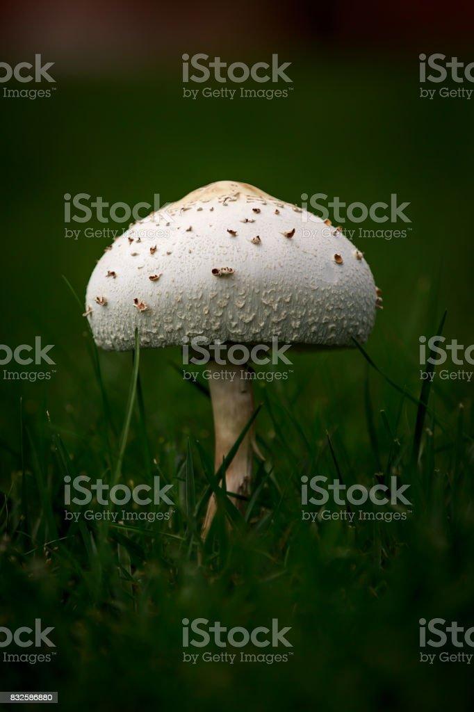 Wild Mushroom stock photo