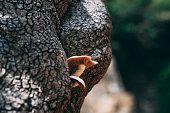 Wild Mushrooms are on Tree Bark
