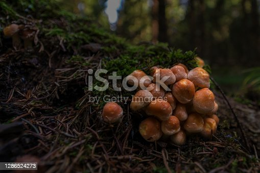 wild mushrooms in the Thuringian Forest