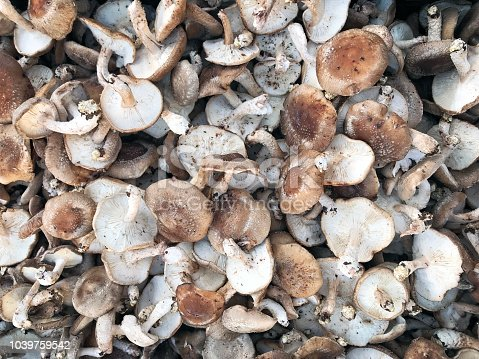 Pile of Wild mushrooms in farmer's market