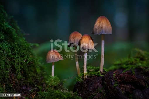 Wild mushrooms in the forest.