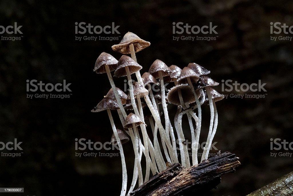 Wild Mushrooms royalty-free stock photo