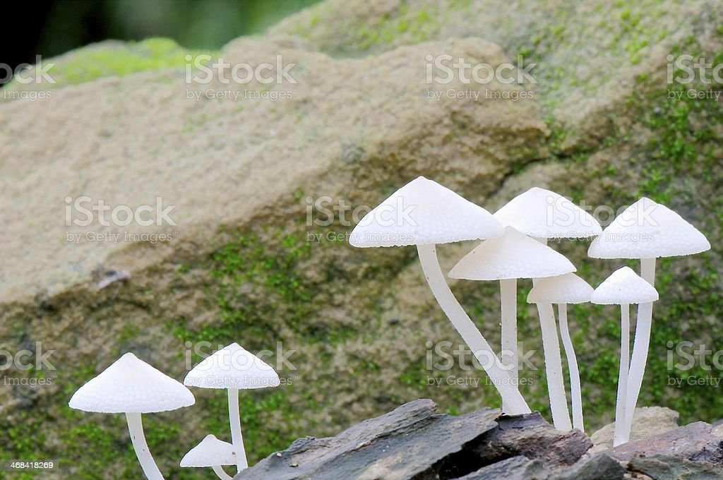 Wild mushrooms royalty-free stock photo