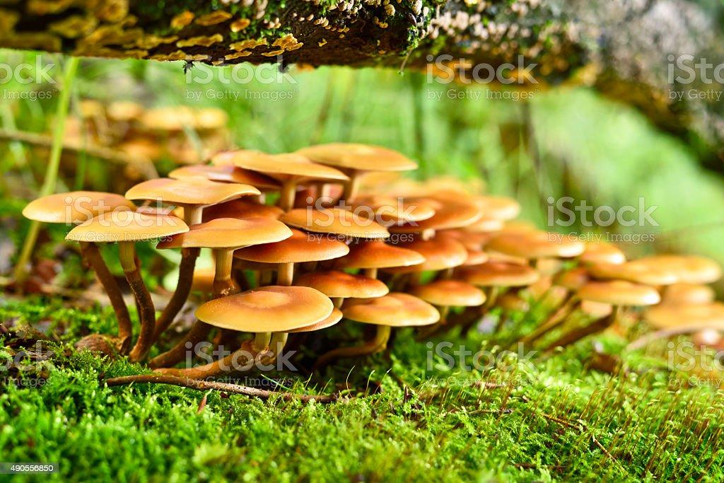 wild mushrooms stock photo