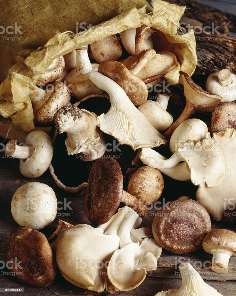 Wild Mushrooms spilling out of bag royalty-free stock photo