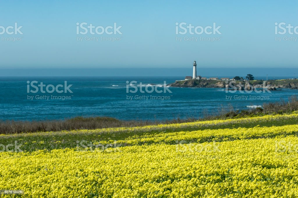 Wild Mustard Plants in Bloom and Lighthouse stock photo