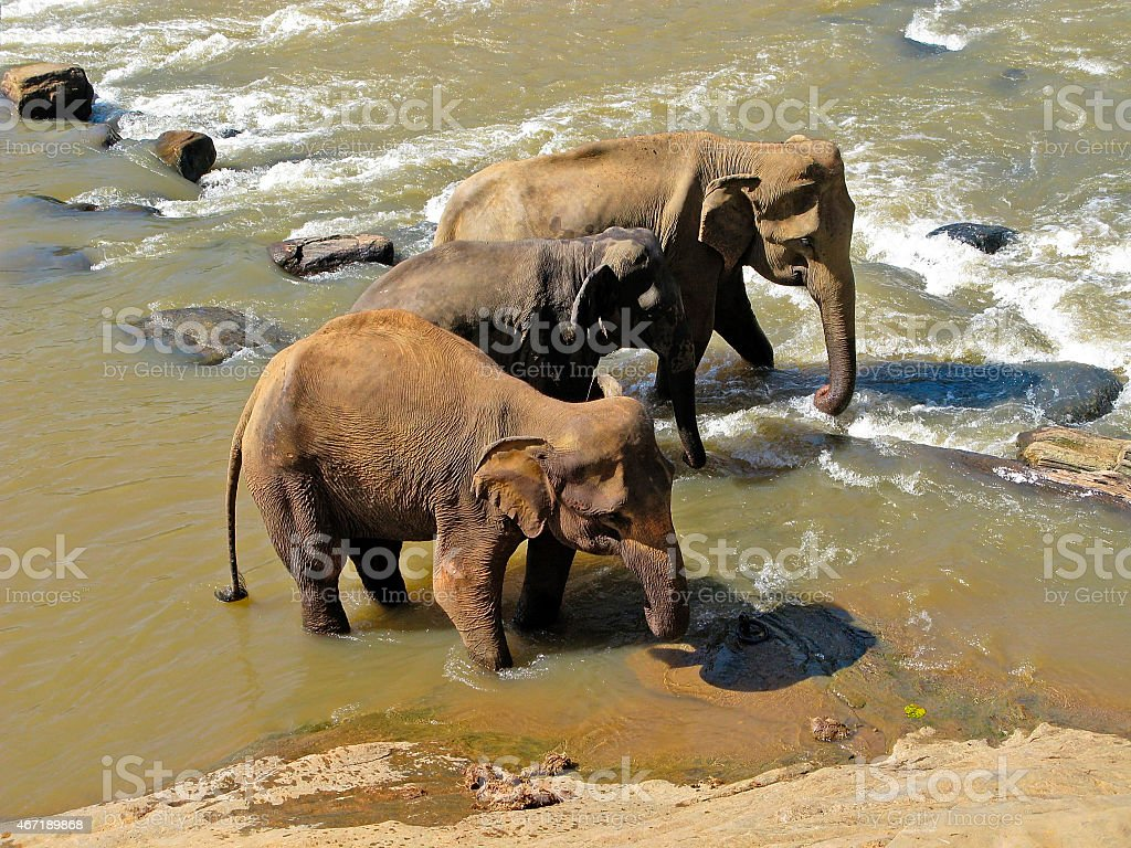 Wild nature. Elephants. stock photo