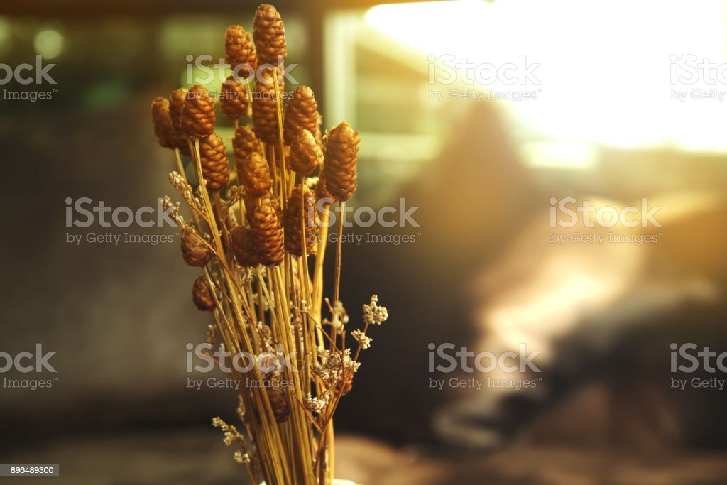 wild nature plant brown dry flower in the cozy room with morning light background stock photo
