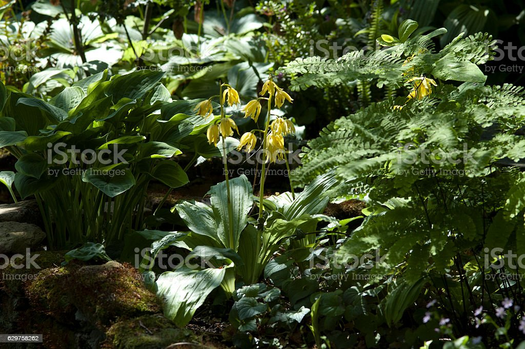 wild orchid stock photo