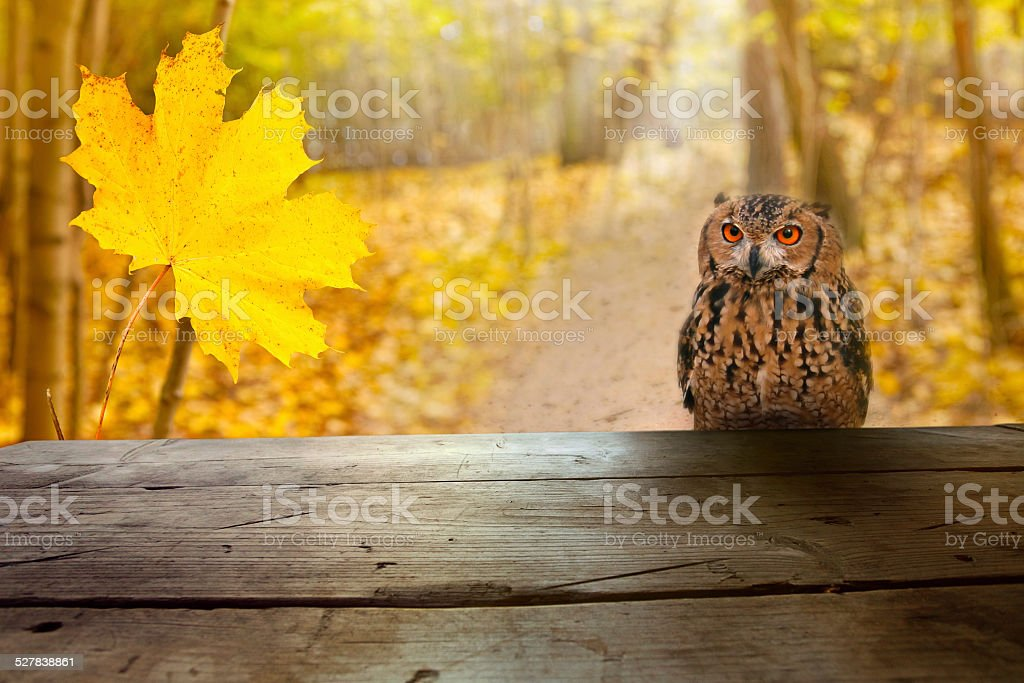 Wild owl in the forest watching from a table stock photo