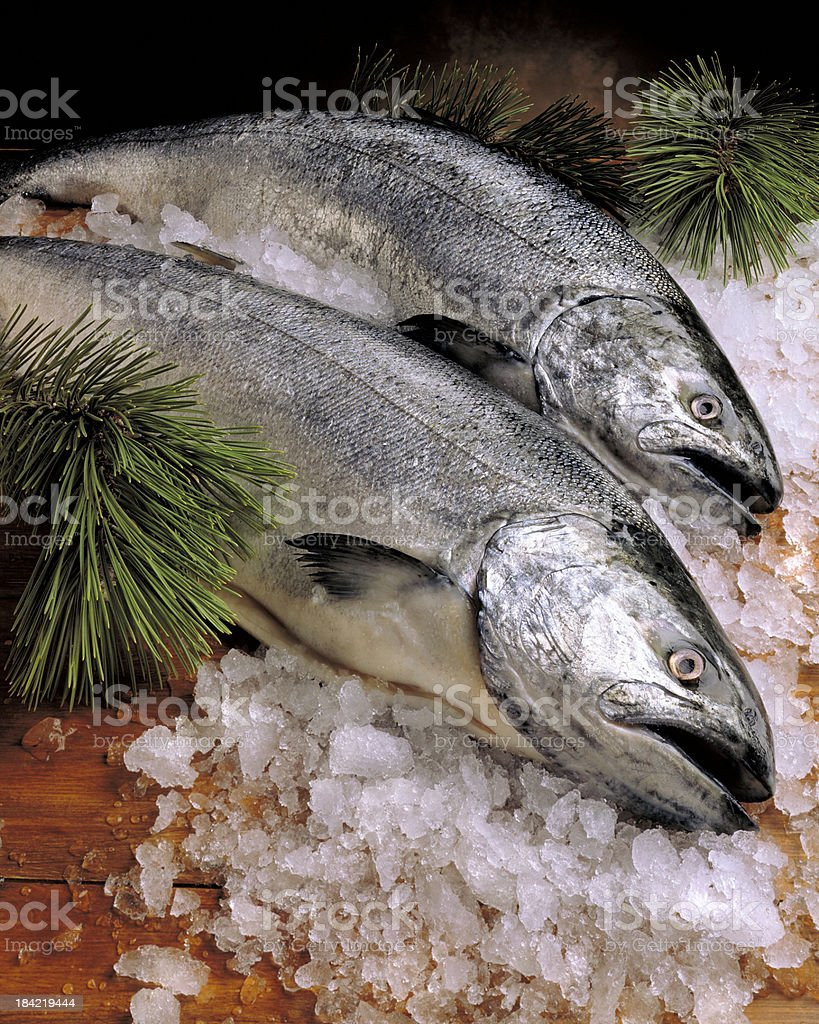 Wild Pacific Salmon on Ice stock photo
