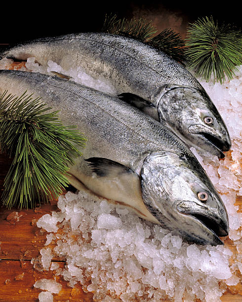 wild pacific salmon on ice - chinook salmon stock photos and pictures