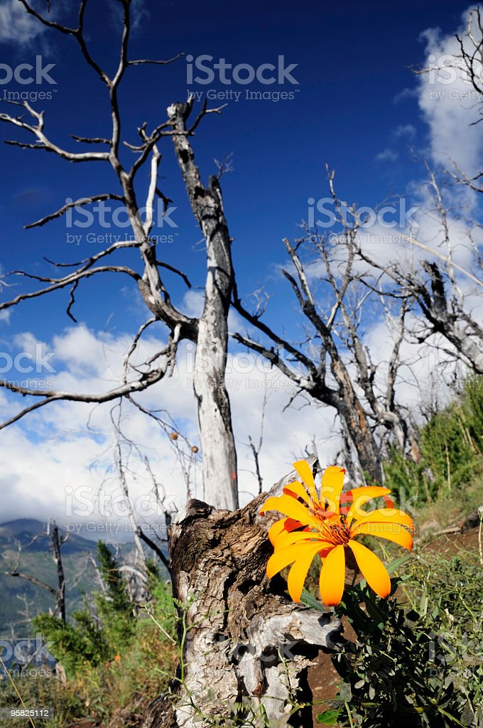 Wild Patagonia royalty-free stock photo