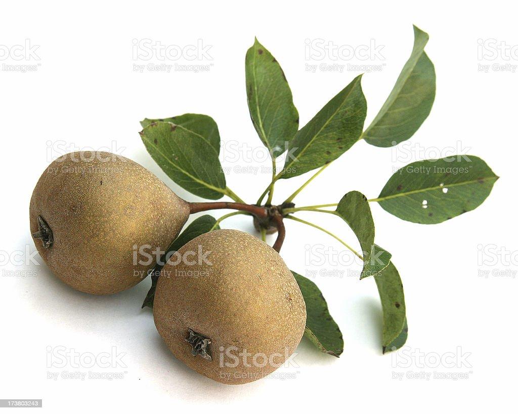 Wild Pears royalty-free stock photo