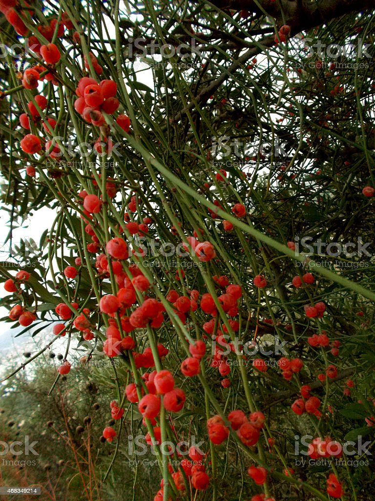 Wild plant with red flowers stock photo