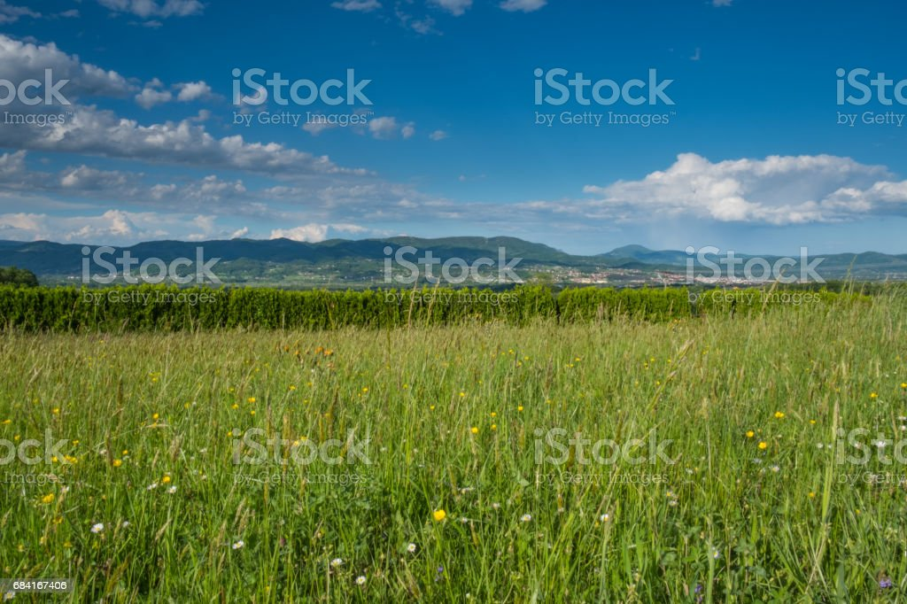 Wild plants meadow royalty-free stock photo