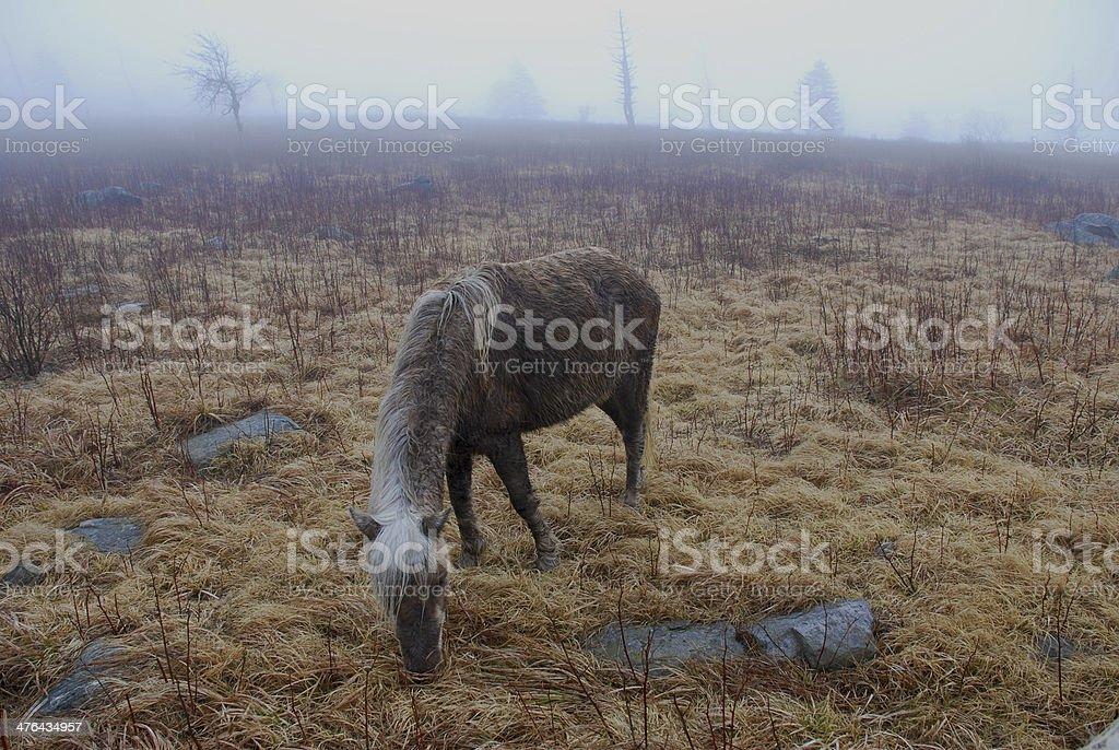 Wild Pony Grazing stock photo