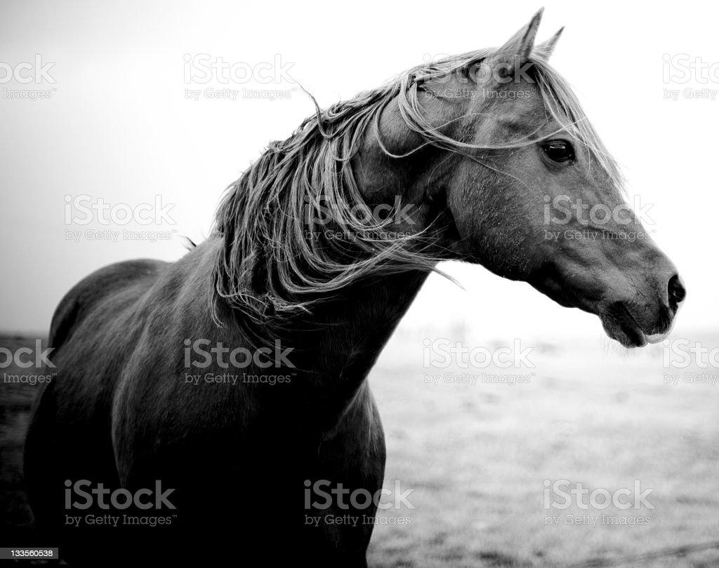 Wild Pony stock photo